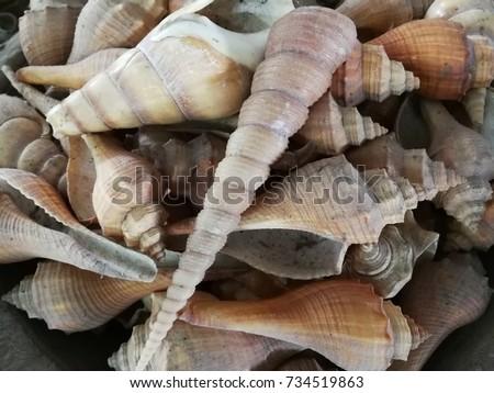 Sea Shells #734519863