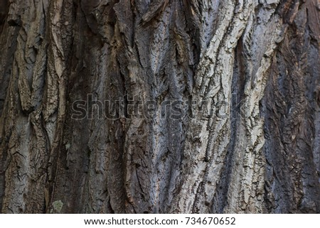 old Tree bark texture background #734670652