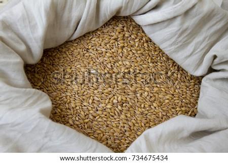 Wheat. Organic Einkorn wheat grains in a bag on a farmers market #734675434