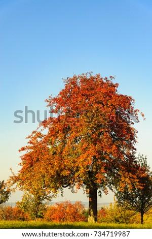 Tree in autumn #734719987