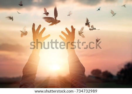 Woman praying and free bird enjoying nature on sunset background, hope concept  Royalty-Free Stock Photo #734732989