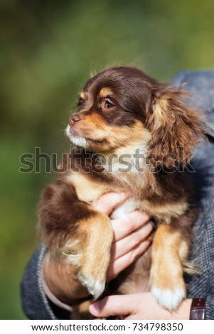 adorable mixed breed puppy portrait #734798350