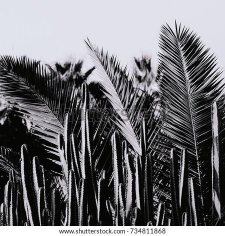 Canary Islands Tenerife Palms and Cactus minimal background