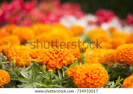 different colors flowers in the garden #734933017