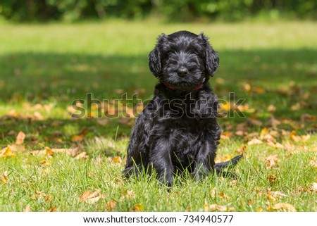 Puppy in a meadow #734940577