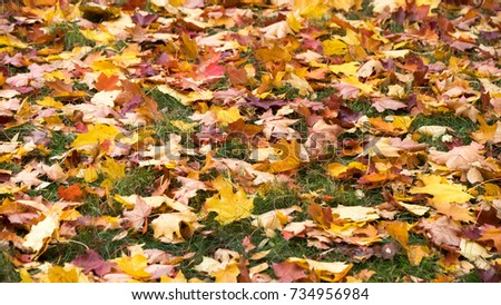 autumn: yellow and red leaves lying on the grass. #734956984