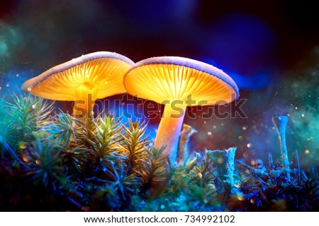 Mushroom. Fantasy Glowing Mushrooms in mystery dark forest close-up. Beautiful macro shot of magic mushroom, fungus. Border art design. Magic light.