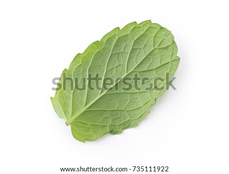 Perfect Green Mint Leaf Isolated on White Background. #735111922