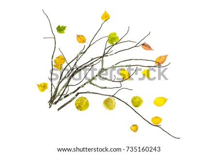 Dry mossy branch of tree with fallen leaves isolated on white background. Decoration. #735160243