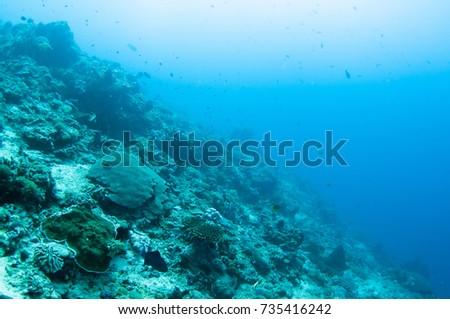 Abstract underwater scene of Lembongan, Nusa Lembongan Island, Bali, Indonesia. #735416242