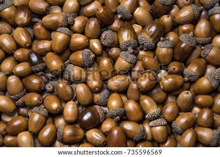 Acorns and acorns Royalty-Free Stock Photo #735596569