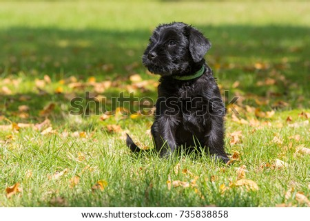 Puppy in a meadow #735838858