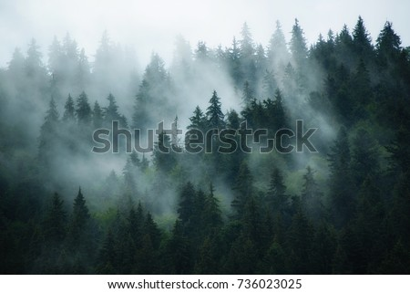 Misty landscape with fir forest in hipster vintage retro style Royalty-Free Stock Photo #736023025
