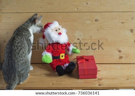 a cat is smelling  Santa Claus doll with red box #736036141