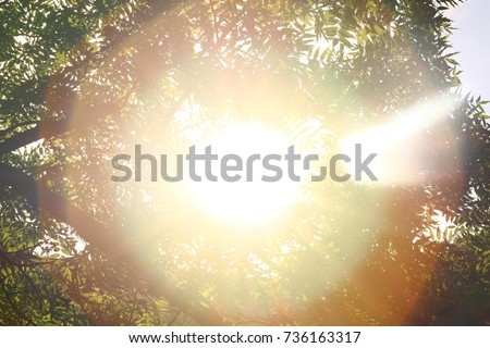 Sunshine. Sky. Bright sun in the sky. Sunlight circles. A solar circle, a bright solar flare, rays in green branches, rays in green trees. Sunset. Sun in the garden.  Royalty-Free Stock Photo #736163317
