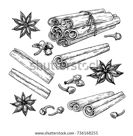 Cinnamon stick tied bunch, anise star and cloves. Vector drawing. Hand drawn sketch. Seasonal food illustration isolated on white. Engraved style spice and flavor. Cooking and mulled wine ingredient. Royalty-Free Stock Photo #736168255