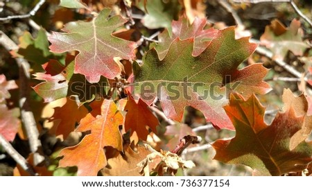 Red Leaves In Fall #736377154