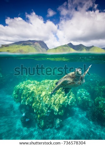 Reef and Mountains with sea turtle #736578304