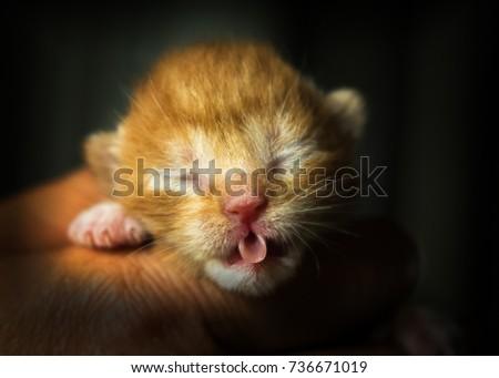 baby cat #736671019