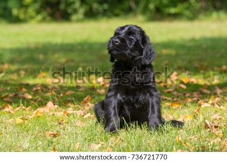 Puppy in a meadow #736721770
