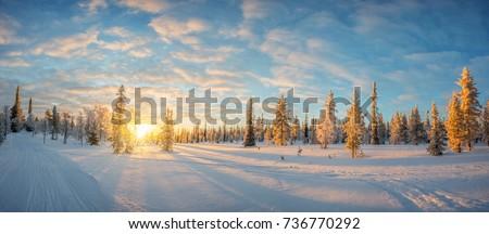 Snowy landscape at sunset, frozen trees in winter in Saariselka, Lapland, Finland #736770292