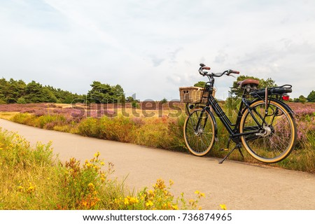 Electric black cargo bicycle with basket in Dutch national park The Veluwe with blooming heathland, The Netherlands #736874965