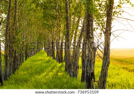 sunny nature background. Tree shadow with sunset rays. trees in perspective. green spring fresh grass. yellow and brown wild meadow with dry leaves. autumn time season #736953109