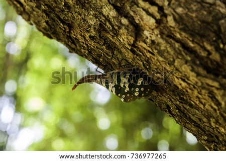 Close-up Fulgorid bug or Pyrops candelaria on Longan tree with bokeh background #736977265