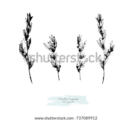 Vector black and white (grayscale) set of herbs (knotgrass or Polygonum aviculare); stylized as stamp or imprint; rustic or boho style, elements for decorative floral design #737089912