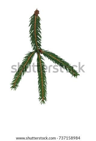 cropped leaf   #737158984