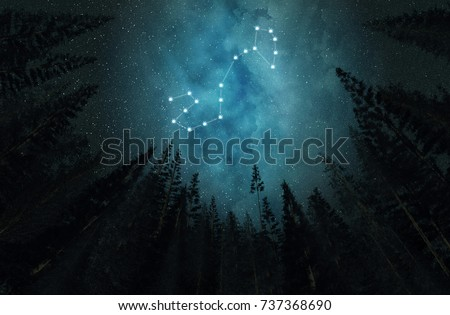 Constellation Scorpio. Night sky. Stars. Night in the forest.