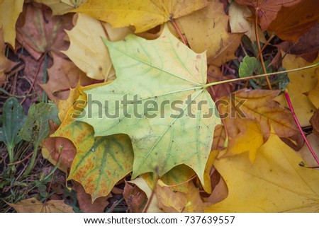 Autumn leaves background #737639557
