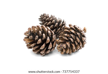 Pine cone isolated on white background Royalty-Free Stock Photo #737754337