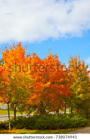 Autumn landscape. Trees with yellow and orange leaves. Blue sky  #738074941