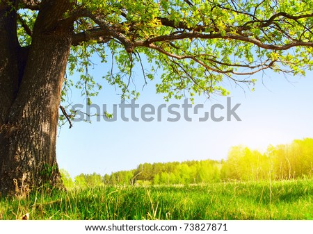 Spring meadow with big tree with fresh green leaves #73827871
