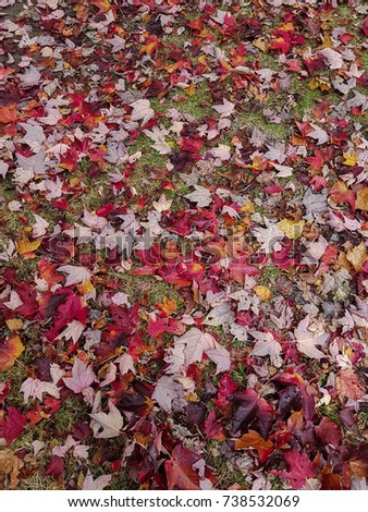Fallen red and orange leaves autumn background #738532069
