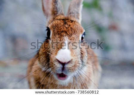 cute wild bunny rabbits in japan's rabbit island, okunoshima