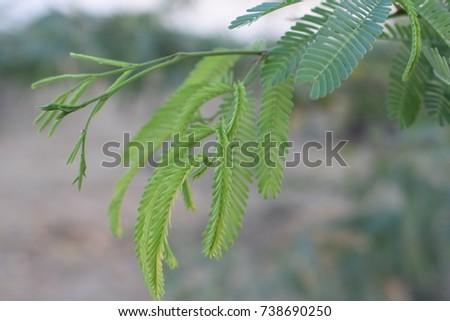 A beautiful leaf #738690250