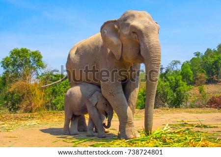 Elephants enjoying life at Patara Elephant camp Royalty-Free Stock Photo #738724801