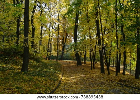 Forest landscape. Road in the park, autumn, trees, yellow leaves. Sunny day. #738895438