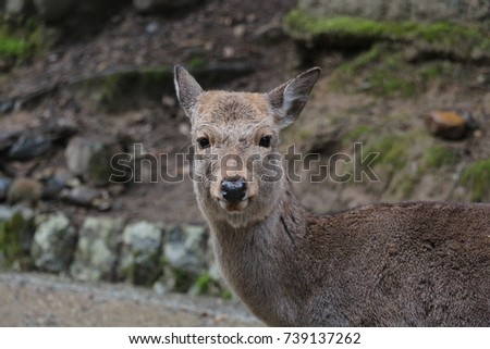 deer in nara park #739137262
