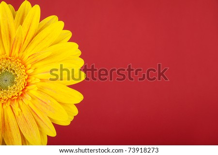 Yellow flower on red background #73918273