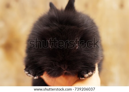 Little black funny rabbit. Decorative rabit on a wooden background. Cute small black bunny. People holding  black rsbbit. #739206037