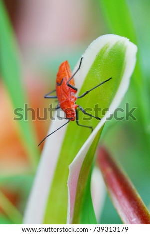 red bug #739313179
