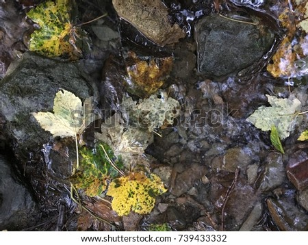 Leaves, Rydal Water, Lake District, Cumbria, England #739433332