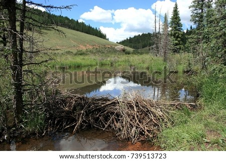 Beaver dam and stream in valley along Horsethief Falls hiking trail in Colorado  #739513723