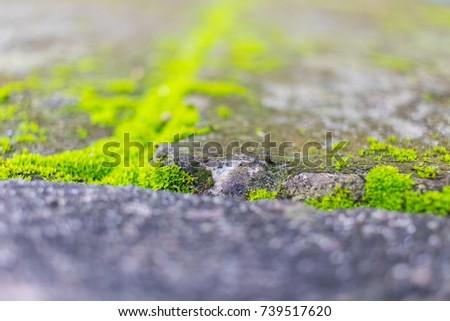 Beautiful green moss in the sunlight, moss closeup #739517620