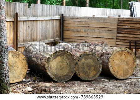 Very large pine logs. Billets for future sculptures made of wood. #739863529
