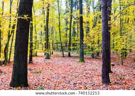 Beautiful forest in autumn, many vibrant colors around, leaves on the ground, big trees. Wide angle shot. #740152213