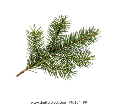 Fir tree branch isolated on white background. Pine branch. Christmas background. #740154499